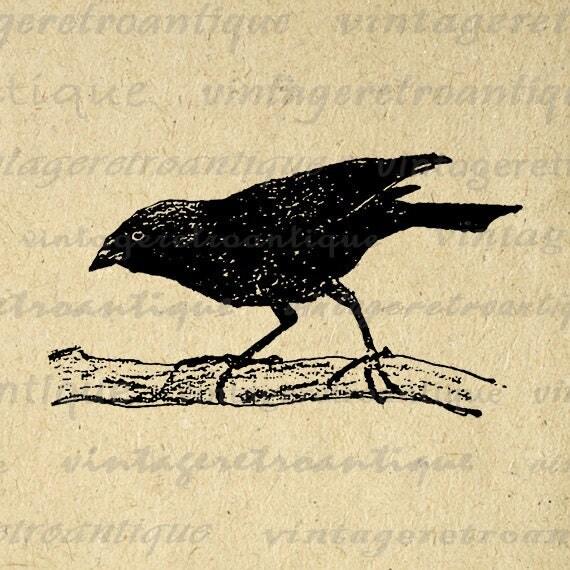 Digital Graphic Black Bird Download Vintage Image Printable Antique Clip Art Jpg Png Eps Print 300dpi No.274