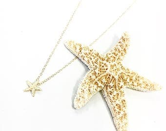 Starfish charm necklace on a 14k gold fill chain