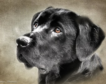 Black Labrador Retriever Wood Print Pet Portrait Pet Photography Dog Photography Dog Lover Art Digital Art