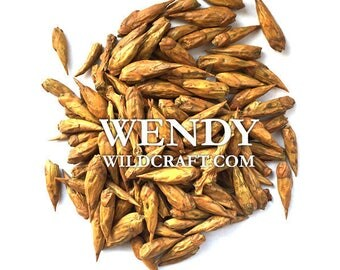 Cottonwood Buds Balm of Gilead Organic