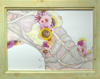 Anatomical Print 4