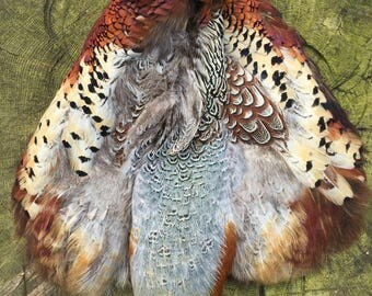 A full body skin of Pheasant feathers