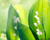 "Lily of the Valley greeting card - 5x7"" framable"