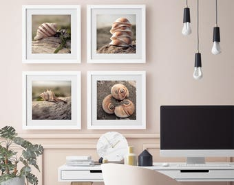 Nautical Wall Decor, Seashell Photography , Set of 4 Wall Art Prints, Nature Beach Photography, Brown, Tan, Green. Nautical Collection
