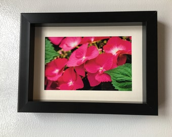 Pink, Flowers, fine art, Photo print