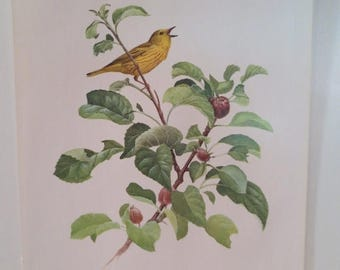 50% Off Estate Sale Vintage Yellow Warbler 1970 Frameable Picture, Wall  Art Print of Bird Watercolor by  J.F. Lansdowne Item 469