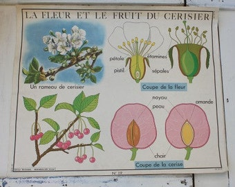 School poster / French Poster / Educational Poster / School Chart / French School Poster / Home Decor / Wall Chart / 1950 Poster