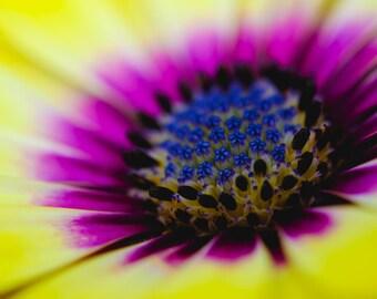 Flower Photography, Nature Macro, Fine Art Photography, Yellow Flower Print, Nature Photography, Flower Art, Nature Wall Decor, Photo Print