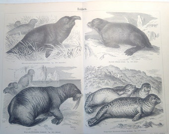 "Lithography, ""Seals""."