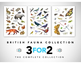 Wildlife Collection, British, 3for2, Animal, Birds, Insects, Animal Print, Fauna Collection