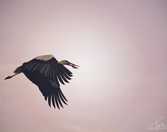 Bird canvas, pink , fine art photography, stork, wall art, nursery, nature photography, panoramic canvas, animal photography, 16x24, 24x36