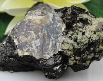 Phlogopite with Diopside Mineral Specimen PHLO2