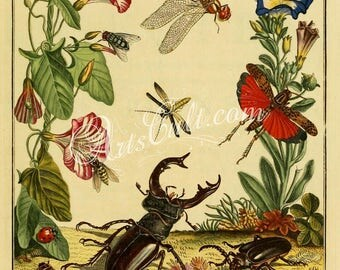 insects-02235 - Beetle Wasp Dragonfly Grasshopper with flowers plants vintage illustration book page cover print clipart painting printable