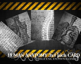 80% Off Human Anatomy Digital Collage Sheet Digital Cards,Printable Image Tags Digital Image Atc Card 3x4 Inch,Gothic Tag,Creepy Hang Tag