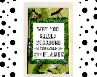 Why You Should Surround Yourself With Plants