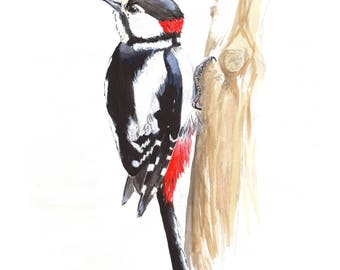 Great Spotted Woodpecker Print - Mounted