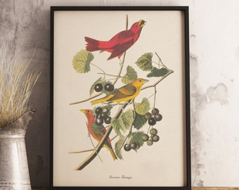 Summer Tanager Print:INSTANT DIGITAL DOWNLOAD Bird print, Antique Bird Painting