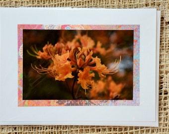 Native Azalea note card