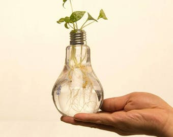 Light Bulb Transparent Glass Vase Fashion Hydroponic Flower Vase Home Decoration diy