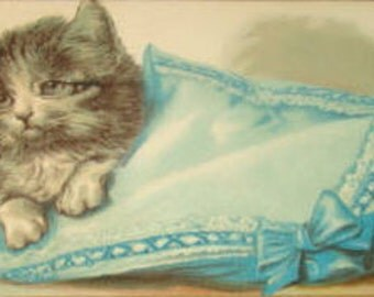 Cute Embossed Kitten Vintage Postcard