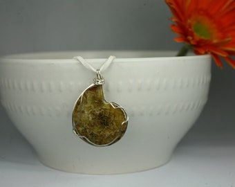 Ammonite Fossil wrapped in Sterling Silver
