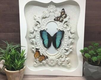 Helenor Morpho/Common Blue Morpho Butterfly Framed Shadow Box