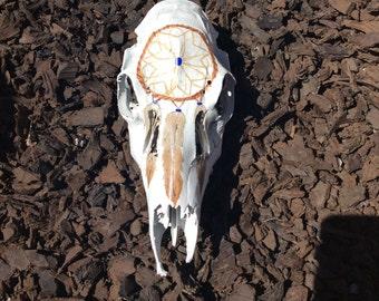 Dream catcher deer skull
