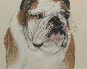 Bulldog Dog Art Original Pastel Drawing by Cori Solomon
