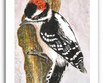 "Downy Woodpecker Art 8x10"" Print Signed and Numbered"