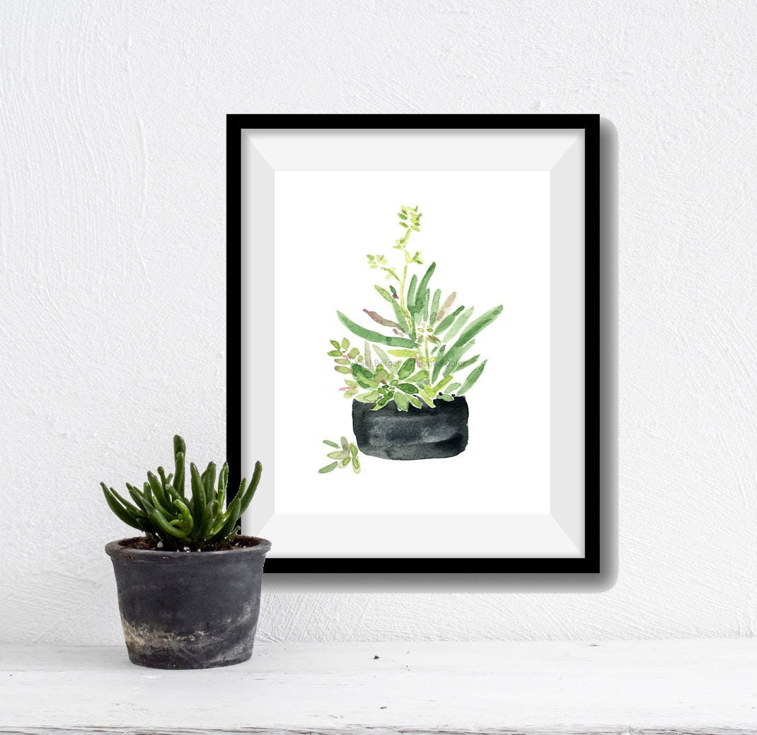 Succulent Art Print Succulent In Black Planter Print