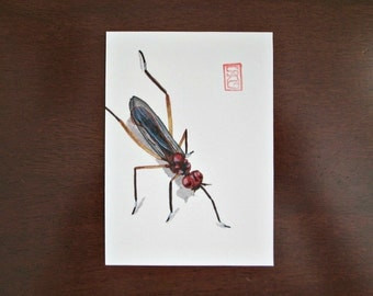 ACEO Small-footed Fly - Archival Print