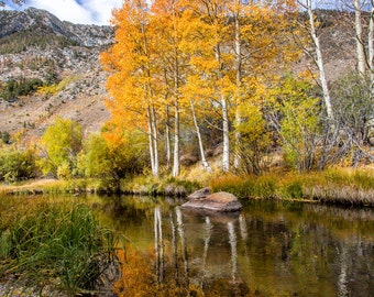 Autumn Photography Mountains Photography  Fall Photography Creek Stream Water Aspen trees reflection home decor  Fine Art Photography Print