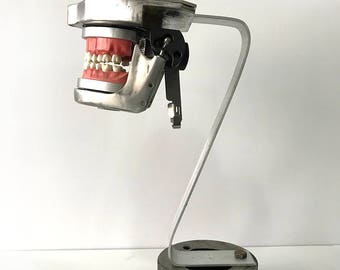Aluminum Dental Jaw Manikin for Dental Practice