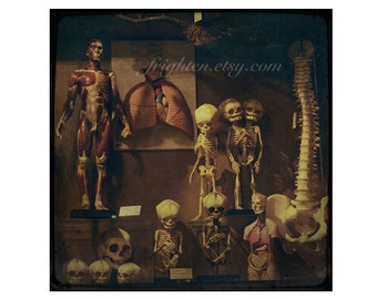 Skeleton Collection Photography Print, Oddities, Skull Art, Halloween Decor, Macabre Art, Conjoined Skeleton