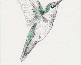 Hummingbird Pen and Ink Drawing, 4x6 Original Fine Art, Bird Sketch