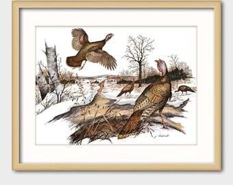Wild Turkey Art Print w/Mat -- Vintage Matted Bird Artwork