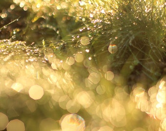 Nature Photography Print - Fine Art Photo of Grass with Dreamy Bokeh Effect - Photo Gift Ideas  - Size 8x10, 5x7, or 4x6