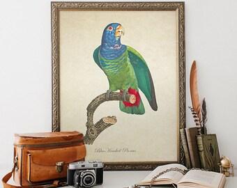 Botanical Parrot Print, Blue Headed Pionus Print, Vintage Natural History Parrot Print, Decorative Blue Headed Pionus Reproduction B039