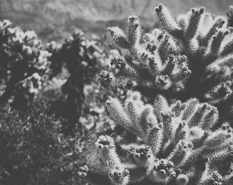 Desert photography, joshua tree, california photography, black and white photography, desert decor, large wall art, desert art, boho, cholla
