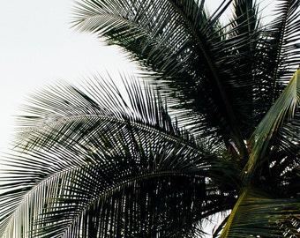 Jamaica Palm - art print - digital print - tree - wall art - photography