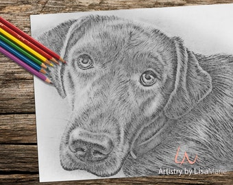 Labrador coloring book page, adult coloring book, coloring page, adult coloring page, coloring book for adult, dog coloring, printable