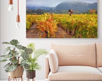 Large Napa Valley Vineyard Photo Autumn Rainbow Photography California Wine Country Harvest Home Decor