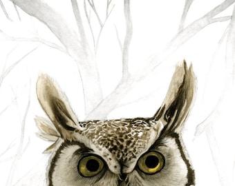 Hibou – Little Owl Giclee PRINT 5 x 7 (Super high-quality)