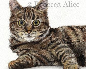 Tabby Kitten - Blank Greetings Card
