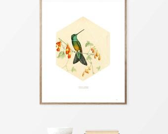 Posters Wall Art Prints Geometric Art, Hummingbird,Wall Hanging For Living Room, Diy modern art, Wall Art, Prints, Art Prints Online.