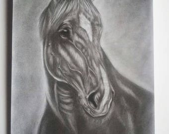 Pencil/charcoal drawing of a horse