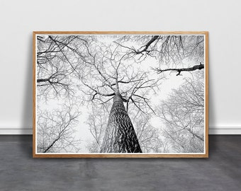 Birch Wall Art, Tree Print, Scandinavian Art, Minimalist Wall Art, Black White Printable, BW Photography, Boho Poster, modern forest print