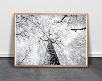 Birch Wall Art, Tree Print, Scandinavian Art, Minimalist Wall Art, Black White Printable, BW Photography, Boho Poster, modern forest print
