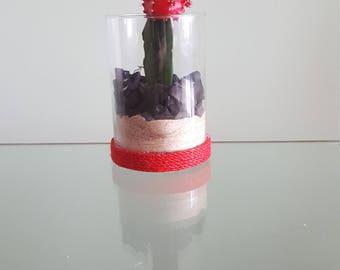 Red Moon Cactus +Terrarium (Assembled Piece)