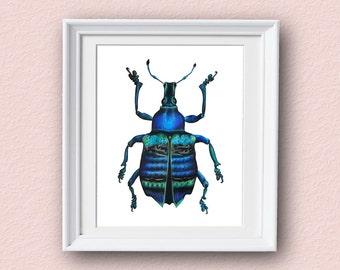 Beetle Art Print - Blue - Beetle Art - Giclee Art Print